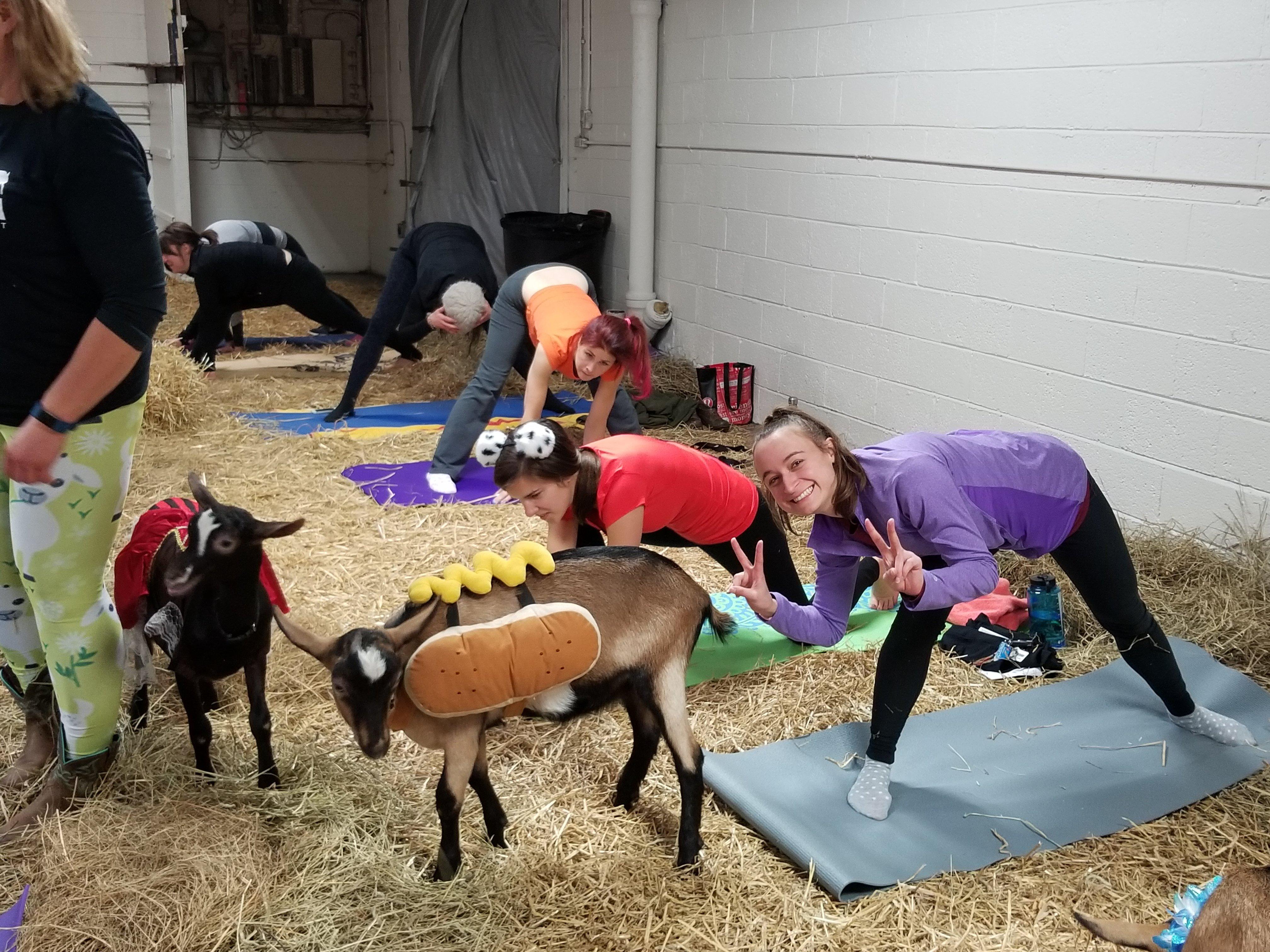 Qodex_Goat Yoga3